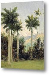 Картина Недалеко от Гонолулу