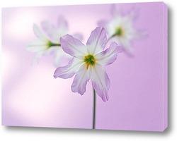 Flower789
