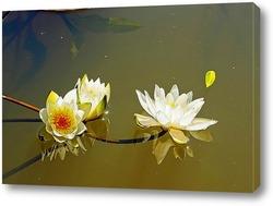Постер Лилии на воде