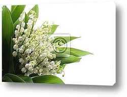 Постер Lily of the valley