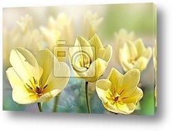 Постер Tulipan
