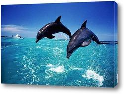 Постер Dolphin063