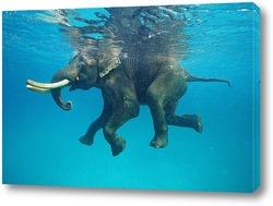 Постер Плывущий слон