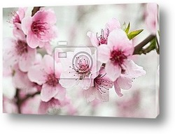Постер Blooming tree in spring with pink flowers