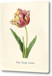 Картина Тюльпан