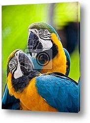 Постер Красивые красочные попугаи