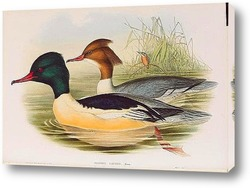 Картина Птицы Великобритании,