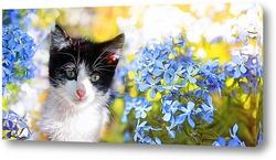 котенок и незабудки