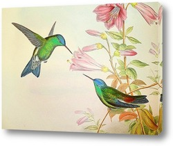 Птицы Великобритании