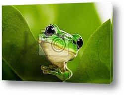 Постер Frog peeking out