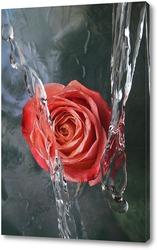 Постер Прекрасная роза в потоках воды