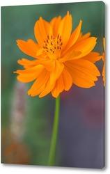 Постер Оранжевые цветы