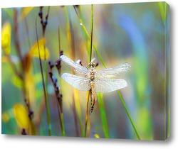 Постер Осенний сон стрекозы