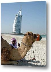 Dubai008