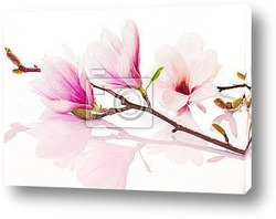 Постер Pink spring flowers with reflection