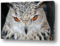 Постер Bird owl closeup