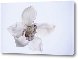 Цветок орхидеи цимбидиум