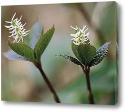 Flower650
