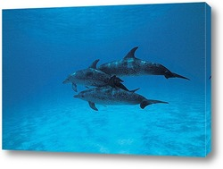 dolphin127