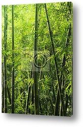 Бамбуковы лес крупным планом