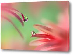 Постер Две капли на розовом
