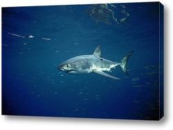 shark055