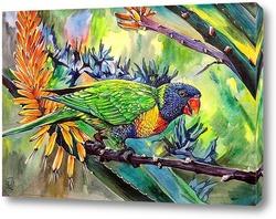 Постер Попугай лорикет