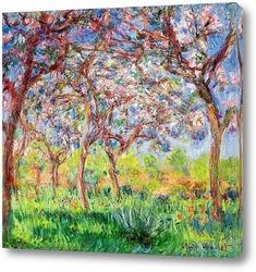 Остров цветов около Ветьиль