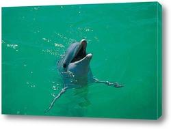 dolphin101