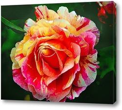 Постер Царица цветов.