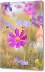 Постер разноцветное лето