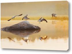 Постер Восход на озере.