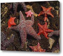 Постер Starfish019