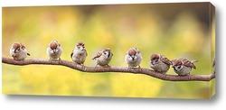 Постер забавные птенчики