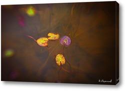 Постер Листья, плавающие в воде
