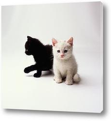Кошка в красной пляпке