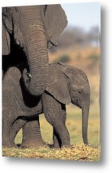 elephant002