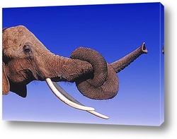 elephant001