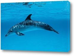 dolphin110