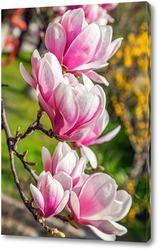 Постер Цветы Магнолии Суланжа