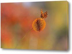 Постер Бабочка на шаре