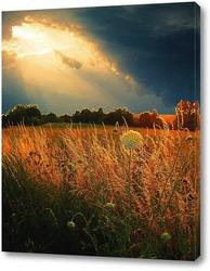 Закатное поле