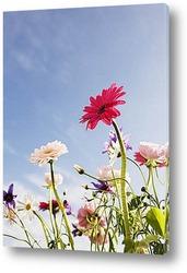 Один цветок на полянке