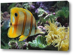 fish141