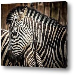A pair of zebras. Serengeti National Park, Tanzania