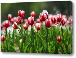 Постер Майские тюльпаны