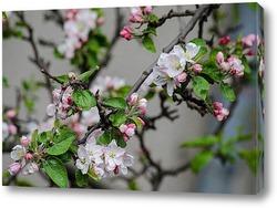 Постер Когда яблони цветут