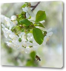 Васильки. Цветущие синие цветы. Крупный план