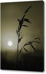 Колос растения на фоне заката