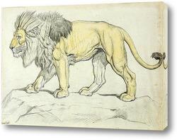 White lion family